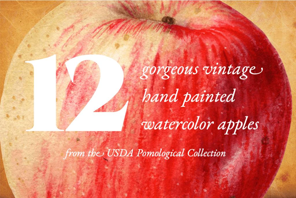 Authentic Vintage Watercolor Apples Vol. 1 Preview 1