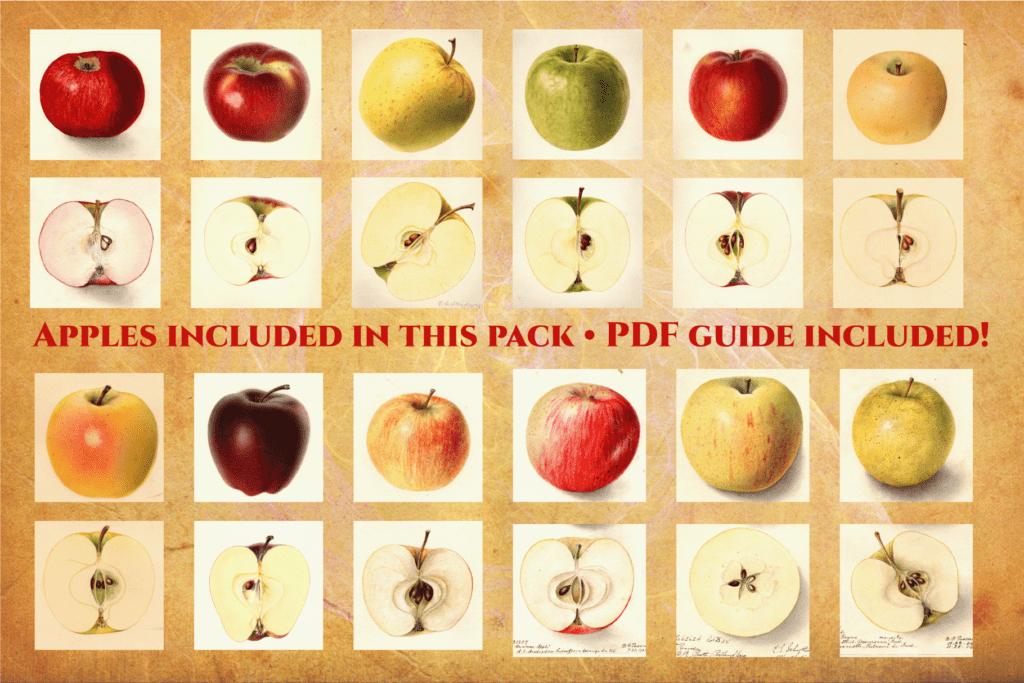 Authentic Vintage Watercolor Apples Vol. 1 Preview 9